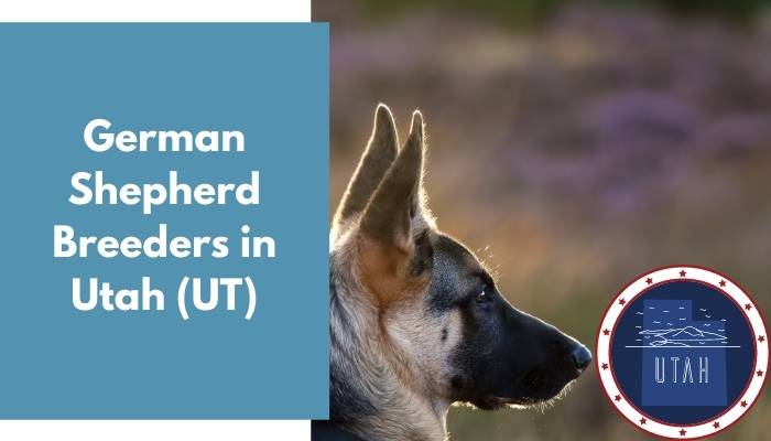 German Shepherd Breeders in Utah UT