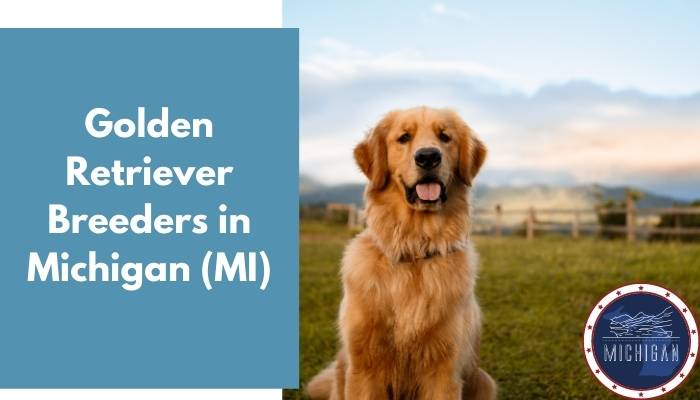 Golden Retriever Breeders in Michigan MI