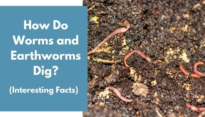 How Do Worms and Earthworms Dig