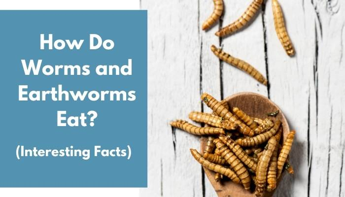 How Do Worms and Earthworms Eat