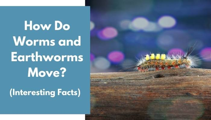 How Do Worms and Earthworms Move