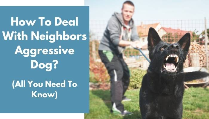 How To Deal With Neighbors Aggressive Dog
