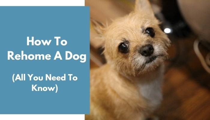 How To Rehome A Dog