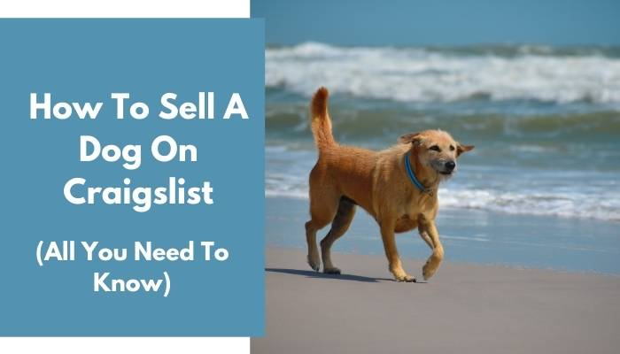 How To Sell A Dog On Craigslist