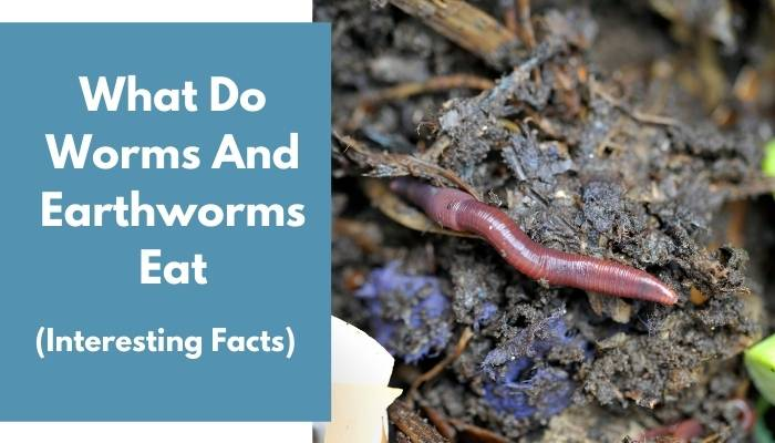 What Do Worms And Earthworms Eat