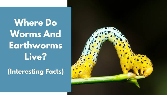 Where Do Worms And Earthworms Live