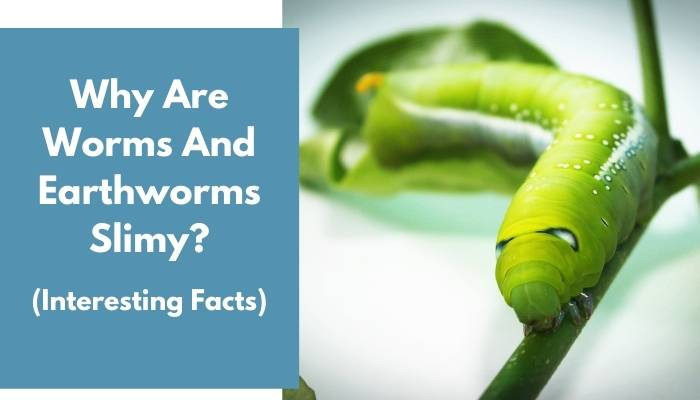 Why Are Worms And Earthworms Slimy