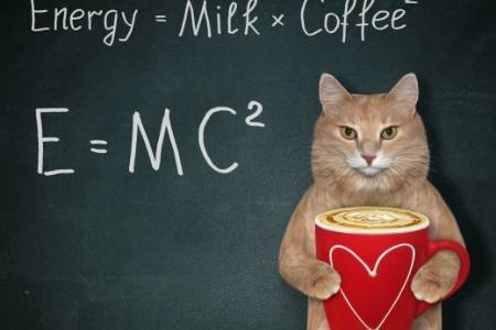 cat and energy