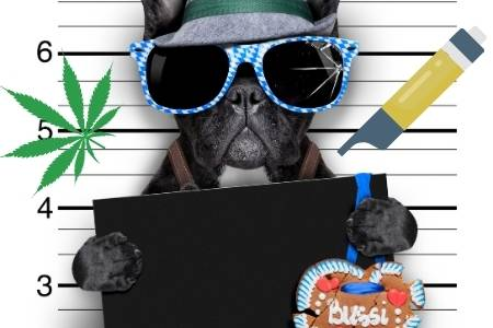 dogs and thc oil
