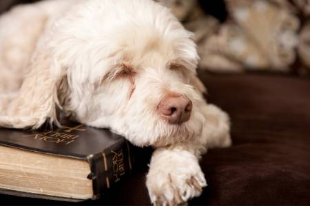 dogs in bible