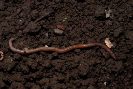 moving earthworm