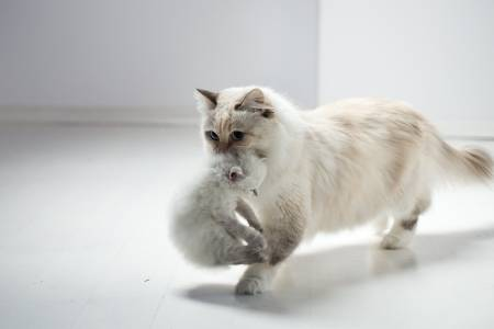 old and young cat