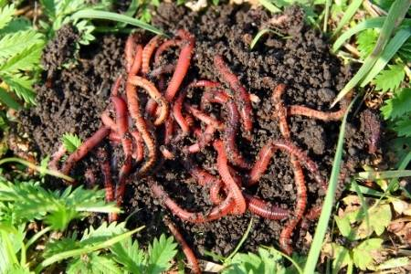 worms and dirt