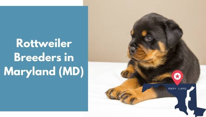 Rottweiler Breeders in Maryland MD