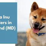 Shiba Inu Breeders in Maryland MD