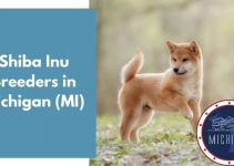 6 Shiba Inu Breeders in Michigan (MI) | Shiba Inu Puppies for Sale