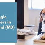 Beagle Breeders in Maryland MD
