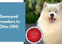7 Samoyed Breeders in Ohio (OH) | Samoyed Puppies for Sale